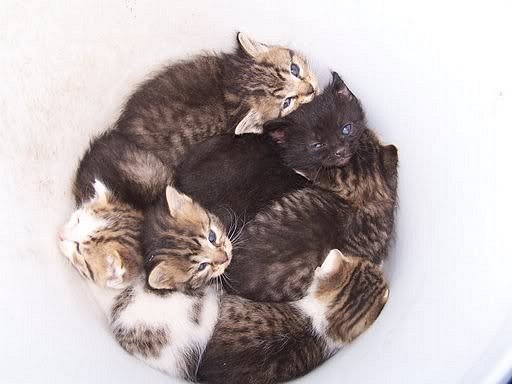Bucket of kittiens at Mom's