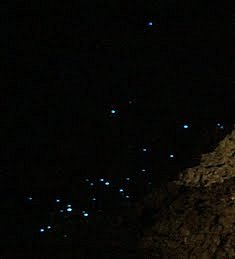 Glowing glow worms